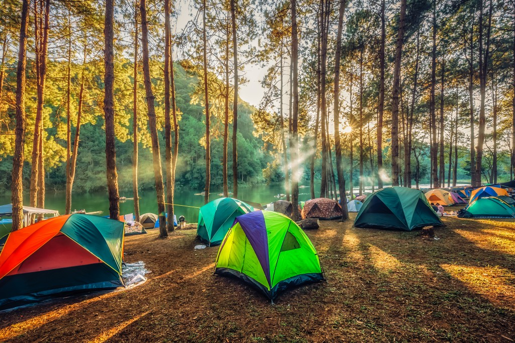 Camping in the pine forest