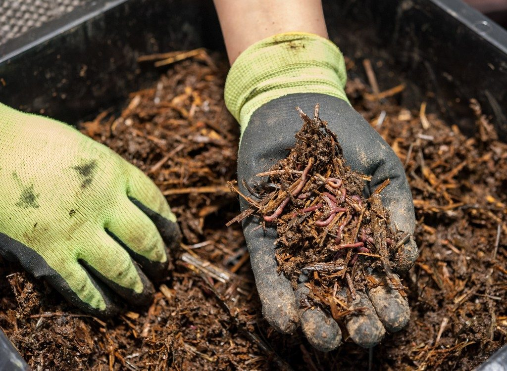 worm composting is a great fertilizer