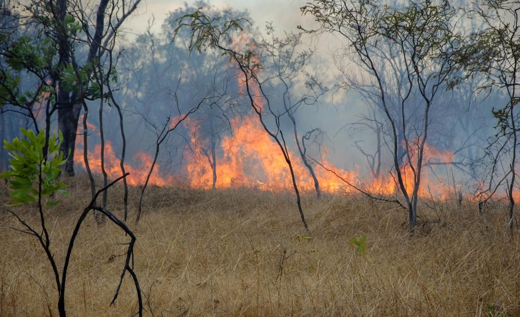 during a bushfire