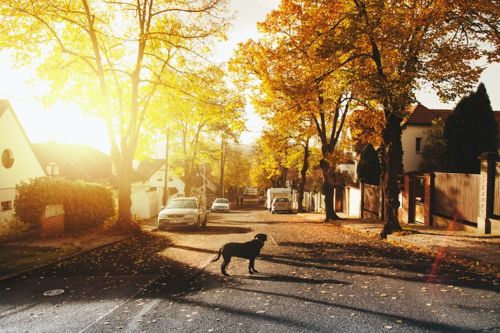 dog on a road